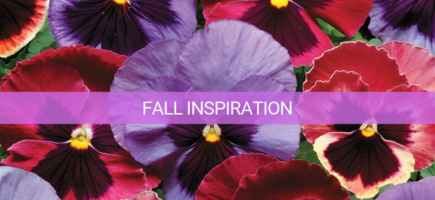 fall flower planting