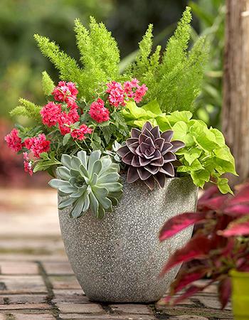 pot planter 15