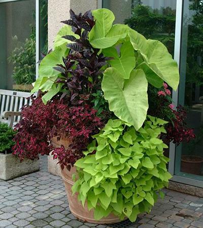 pot planter 6