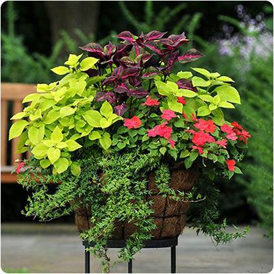 pot planter 8