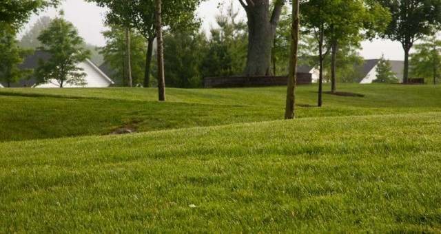 Commercial Properties Need Turf Care Programs