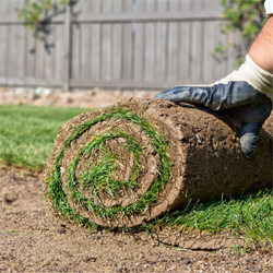 Hydroseeding Or Sod: What Is Best and What You Need to Know