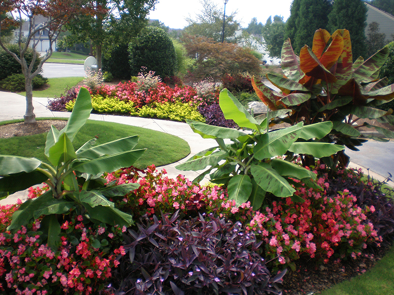 Summer Seasonal Plantings - Complete Landscaping Service, Commercial Landscaping Contractors serving MD, DC and VA