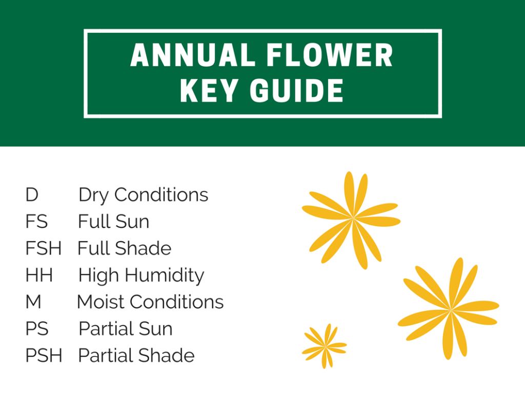 Annual Flower Key Guide for planting annual flowers on your commercial property in MD, DC and VA - Complete Landscaping Service