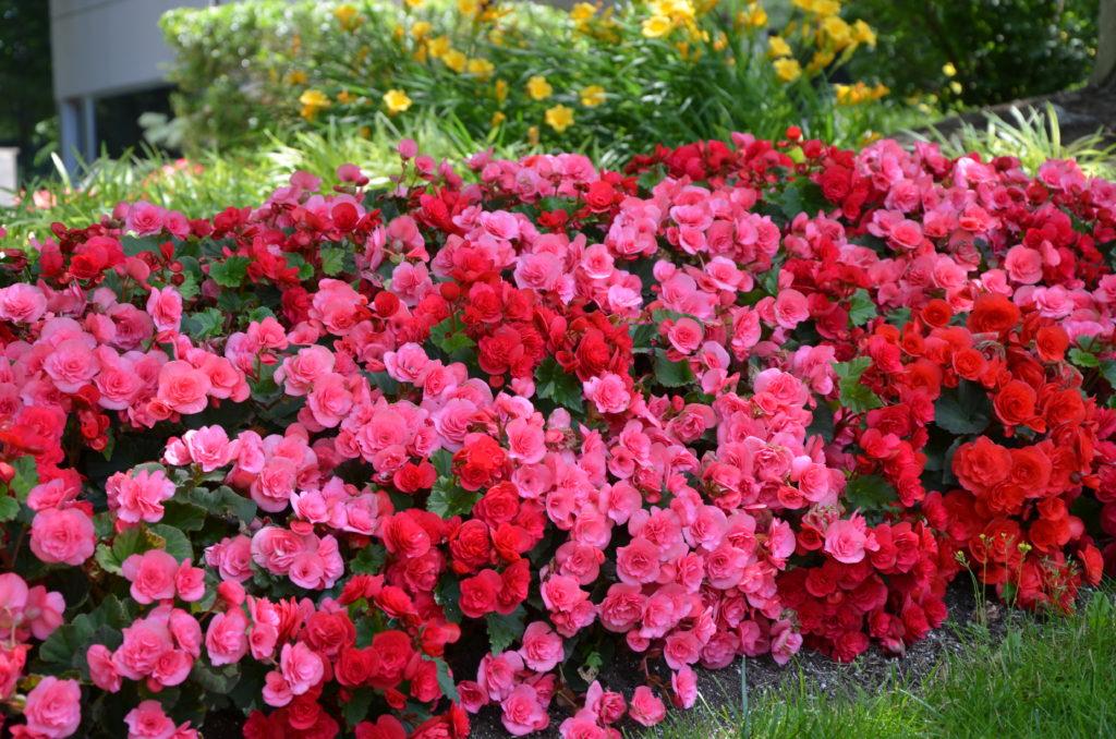 Fertilizing Annuals - Complete Landscaping Service