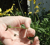 How to Ensure Healthy Annuals for Your Commercial Property - Complete Landscaping