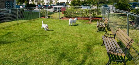 Attracting Dog Loving Tenants to Your Property with Dog Parks - Complete Landscaping Service