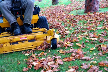 Leaf Removal for Commercial Properties in MD, DC, VA - Complete Landscaping