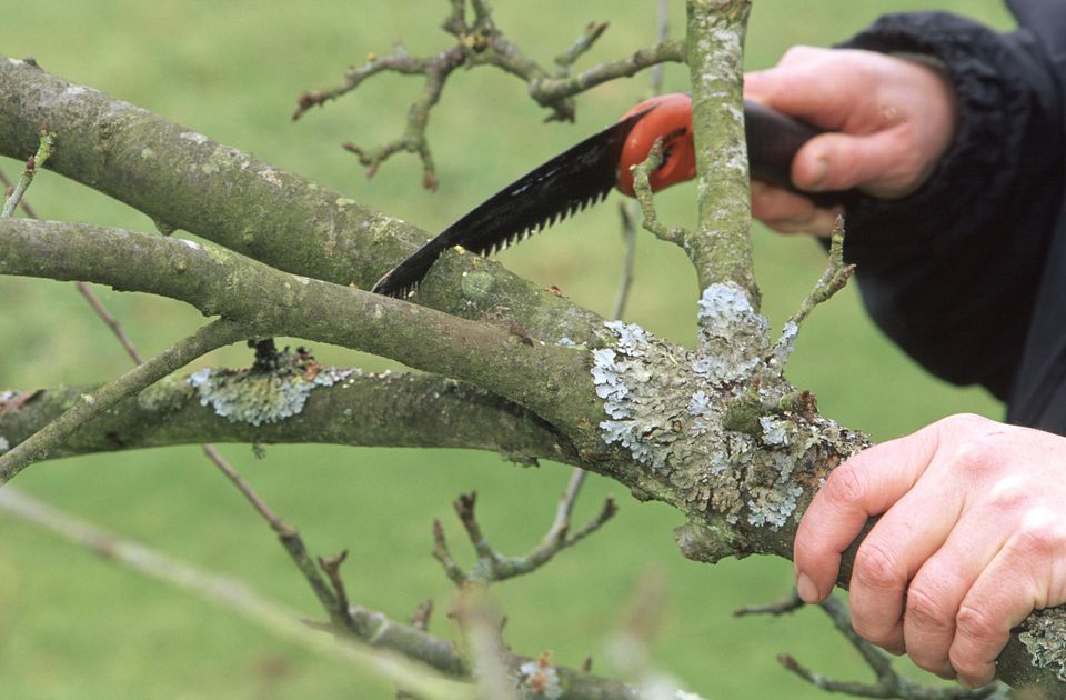 When to Prune Plants - A Handy Guide - Complete Landscaping Service - MD, DC, VA