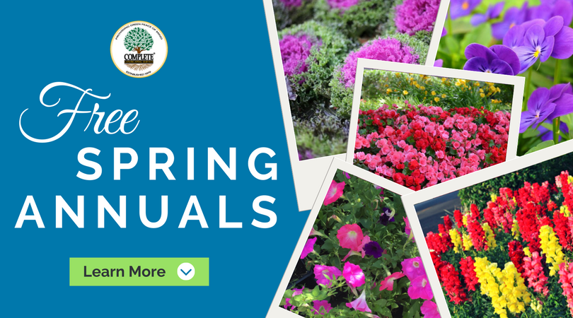 Free Spring Annuals Promotion | Complete Landscaping Service