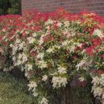 best spring flowering shrubs | complete landscaping service - md, dc, va