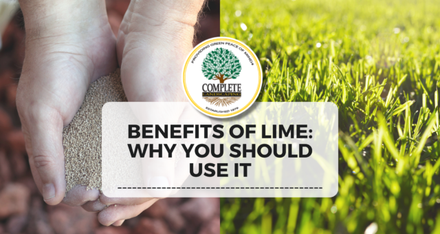 Benefits of Lime: Why You Should Use It