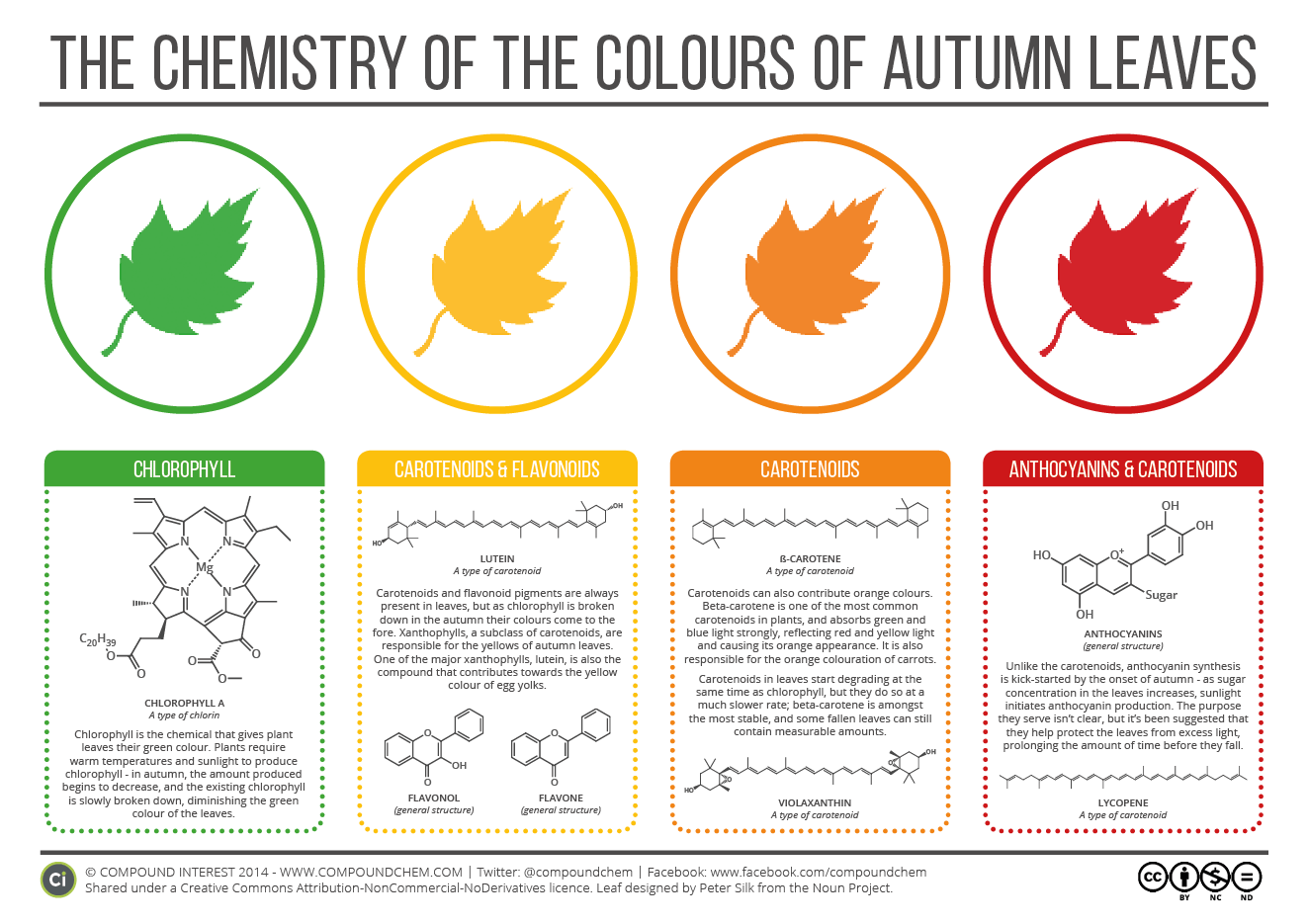 Chemistry of Autumn Leaves