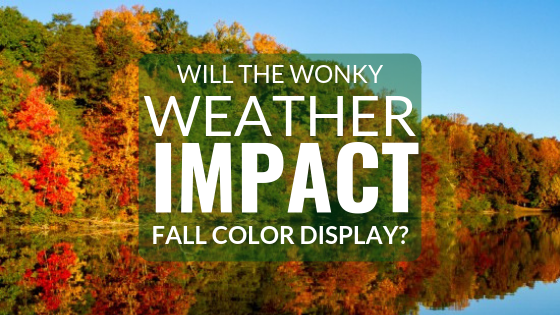 Will the Wonky Weather Impact Fall Display?