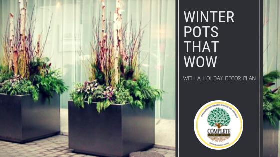 Winter Pots that WOW!