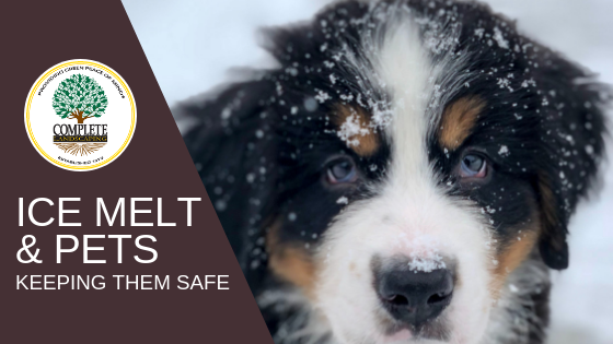Ice Melt-Is It Safe for Pets?