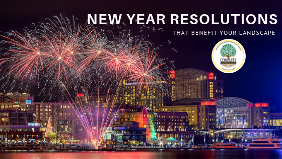 New Year Resolutions that Benefit your Landscape