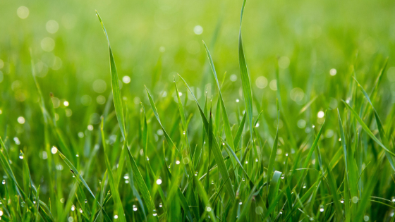 Making Organic Lawn Care Work for Your Commercial Property