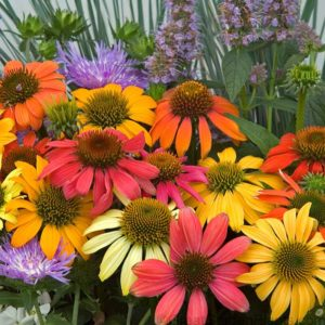 Cone Flower - Complete Landscaping Service MD, DC, VA