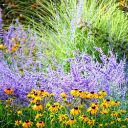 Drought Resistant Plants to Brighten Your Summer Landscape