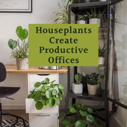 Houseplants Create Productive Offices