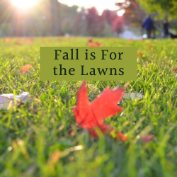 Fall is for the Lawns