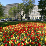 tulips in front of an office