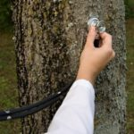 testing the health of your tree