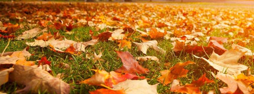 clean up your fall leaves