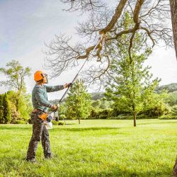 Winter Tree Pruning-Shape Up for Spring