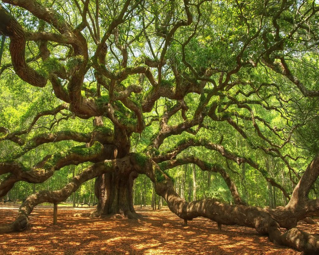 Tree Check-Up