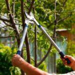 Rejuvenate Your Landscape with Dormant Pruning