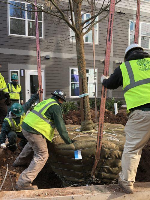 Landscape Construction Maryland