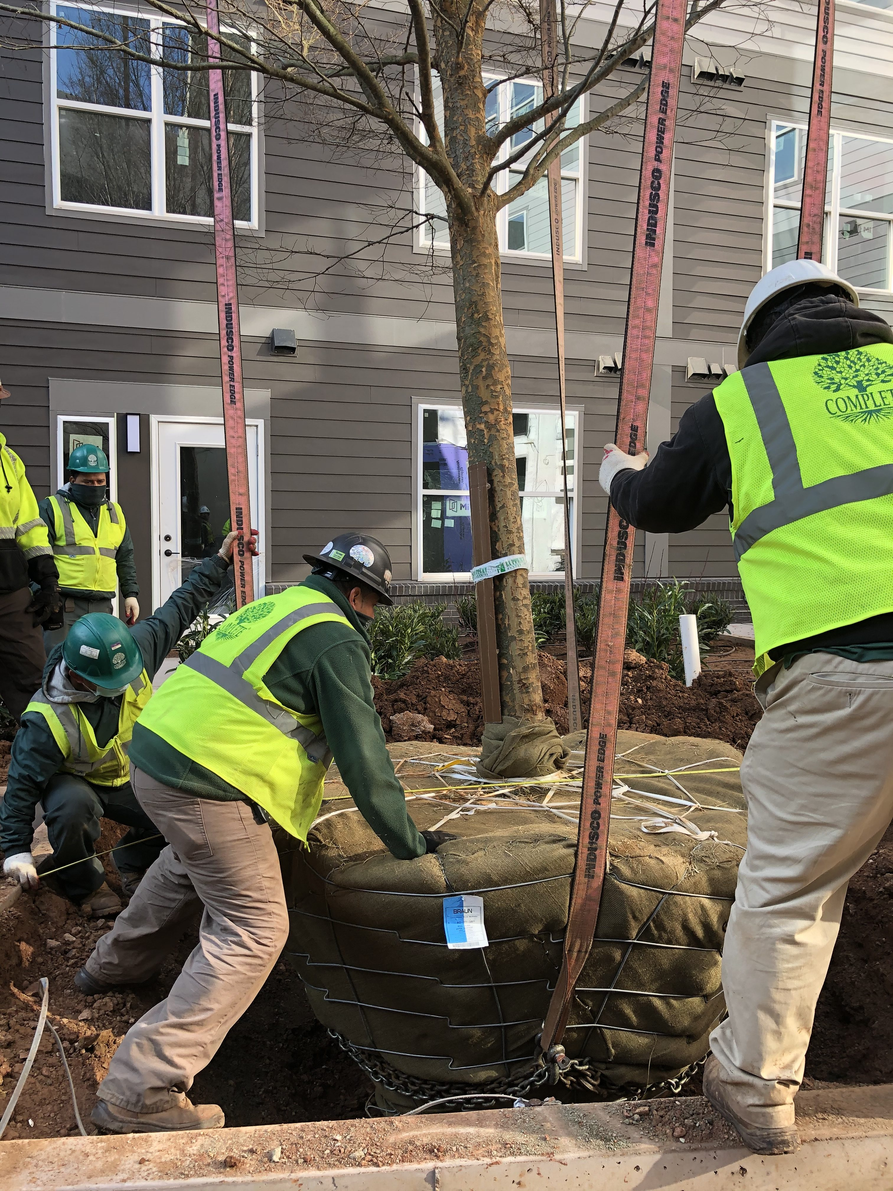 complete landscaping service planting a tree