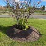 How do you know if you have too much mulch?