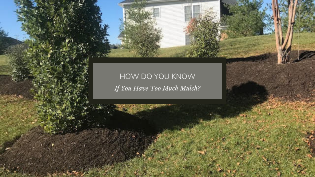 Landscaping beds with too much mulch around trees and shrubs.