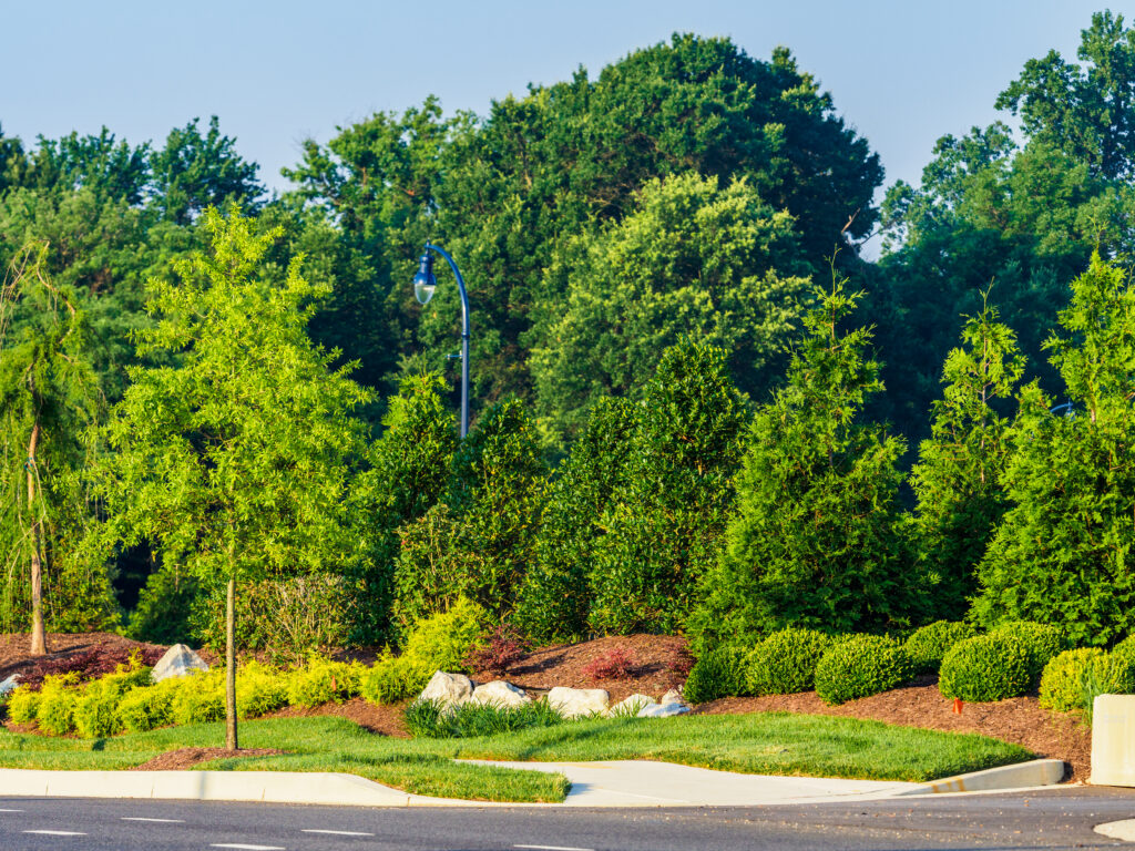 Fall Color Alternatives-Evergreens Complete Landscaping Service