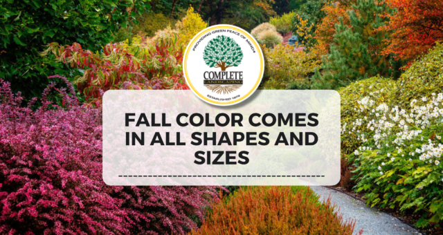 Fall Color Comes in All Shapes and Sizes